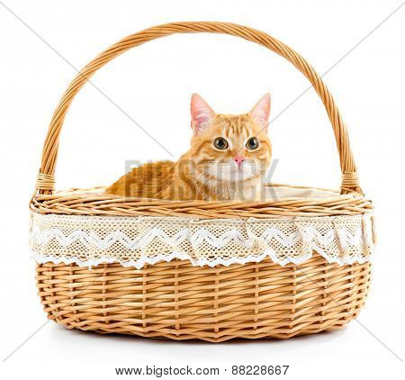 Red cat in wicker basket isolated on white