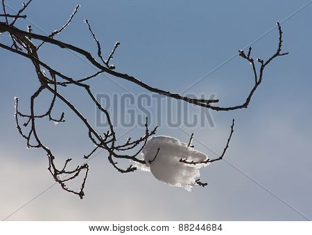 Frozen branch in backlight,  in winter season, Vosges, France