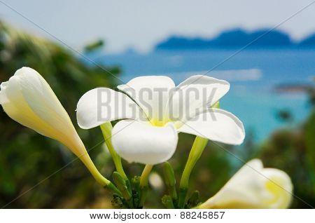 Sunny Petals Idyllic Blossom