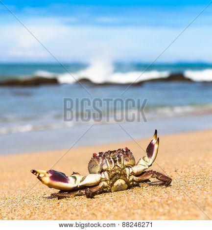 Seafood Posing Alien Creature