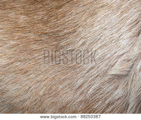 light fur texture.
