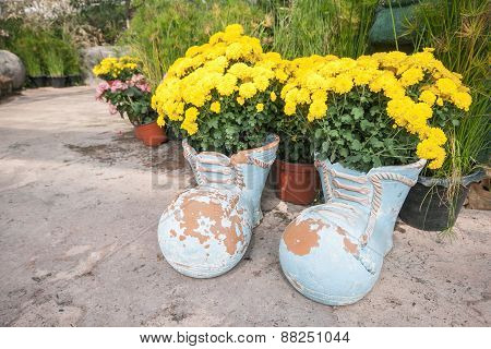 Blossom Marigold In Pots With Boot Shape.