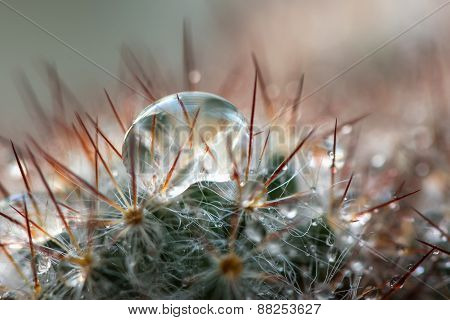 Cactus Needles Drops Water Background