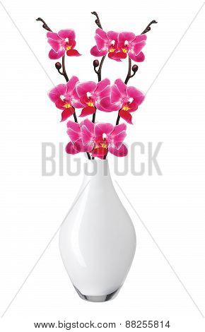 Flower Beautiful Pink Orchid - Phalaenopsis In Vase Isolated Over White