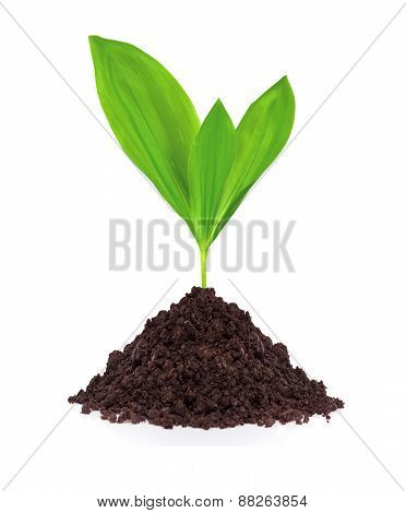 Young Plant In Ground Isolated On White Background
