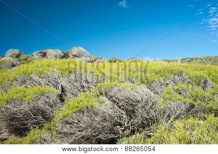 Coastal Thicket