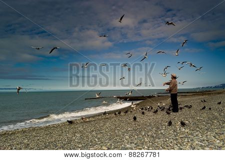 Old Man Feeds The Pigeons And Gulls