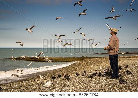 Old Man Feeding The Birds