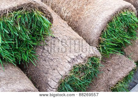 Ready Rolled Turf