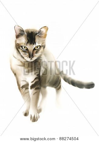 Agressive Brown Cat Watercolor Illustration On White Background