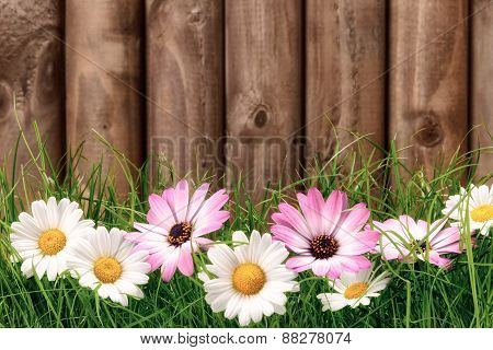 Flowers On Grass In Front Of Wooden Fence