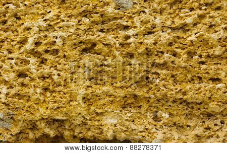 texture of coquina stone