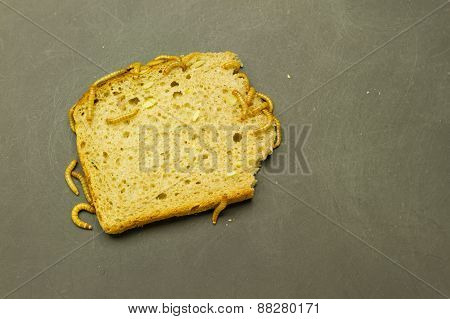Mealworm Eat Bread