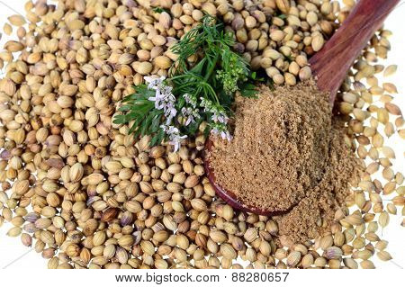 Coriander seeds, Fresh Coriander and Powdered coriander