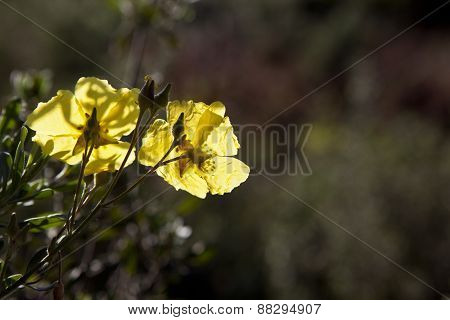 Wild Flower On Backlight