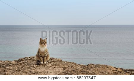 Sad Homeless Cat Sitting On The Beach. The Image Is Tinted And Selective Focus.