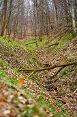 foto of fallen  - Fallen trees in a deciduous forest on a spring day