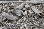 stock photo of driftwood  - a stranded driftwood in different shapes and sizes - JPG