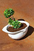 image of environmentally friendly  - Green plant in white helmet on rusty background  - JPG
