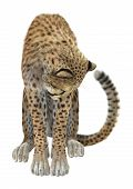 pic of cheetah  - 3D digital render of a cheetah isolated on white background - JPG