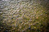 stock photo of algae  - Water covered stone and algae in natural light - JPG