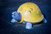 picture of testudo  - A sad looking yellow concrete tortoise rests on wet asphalt - JPG