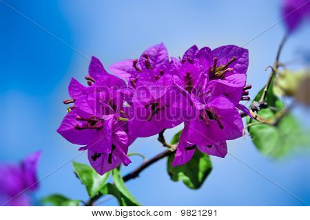 Cluster Of Bright Pink Flowers On A Tree Branch