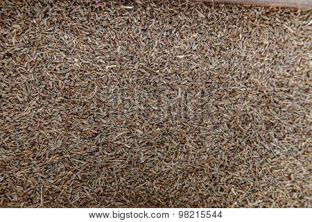 Cumin Seed Spices