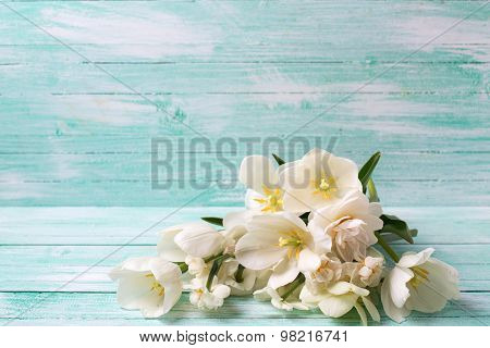 Background  With White Daffodils Flowers
