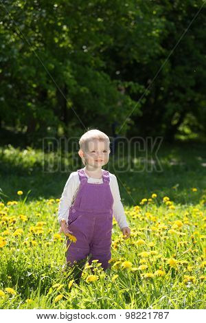 Little Girl Plays On A Glade With The Blossoming Dandelions