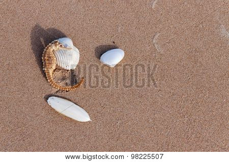 Cuttlebone And Sea Horse On Sand