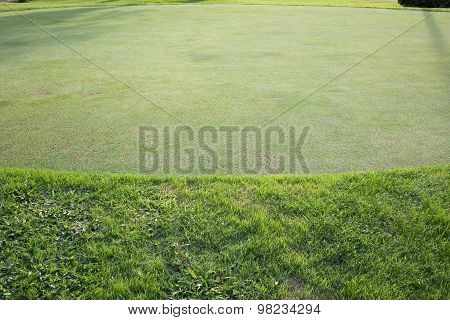 Green Grass Field Of Golf Course, Sport Background