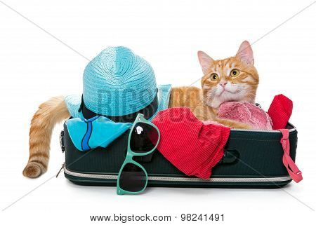 Ginger Cat Lay On A Suitcase