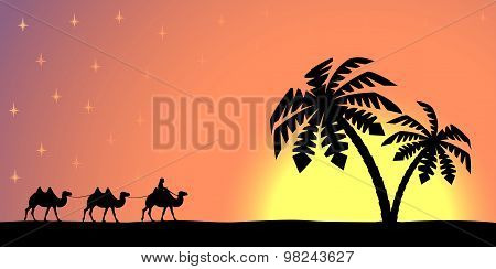 Man with camels at sunset.