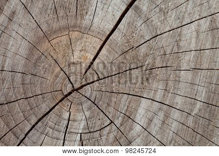 Tree Trunk, Cross Section