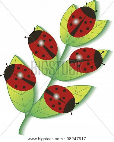 Ladybugs on a branch
