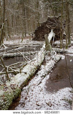 Old Natural Stand Of Bialowieza Forest By Water