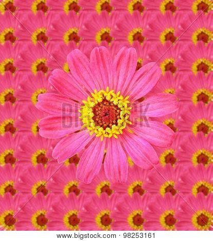 Fresh Zinnia Flower Background