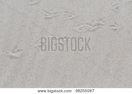 White Sand Beach With Traces Of Birds As A Background