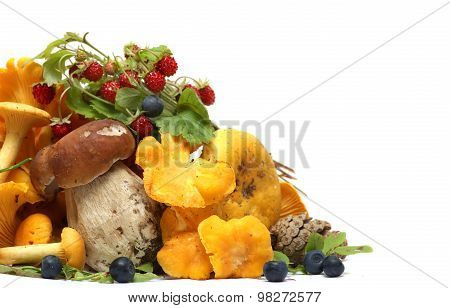 Mushrooms, berries, pine cones, strawberries and blueberries isolated on white background. gifts of