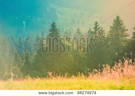Summer Photo Background