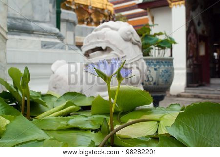 Waterlily On Temple