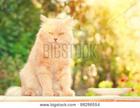 Cat portrait. Cute red big cat portrait over nature green blurred background close up
