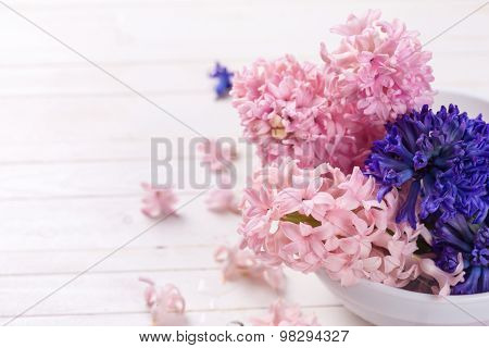 Hyacinths Flowers  On White Background