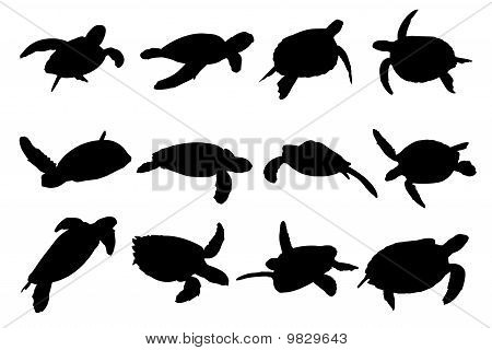 Turtle Vector Silhouettes - Collection of turtle vector silhouettes, Art for Designer