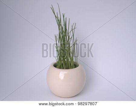Miniature Flowerpot with Grass