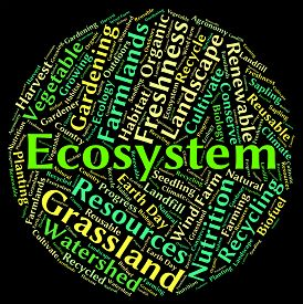 picture of ecosystem  - Ecosystem word showing eco biosystem and ecology - JPG
