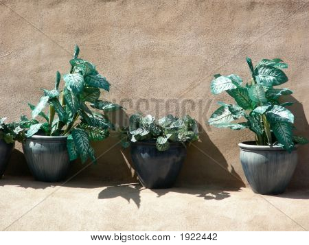 Plants And Adobe