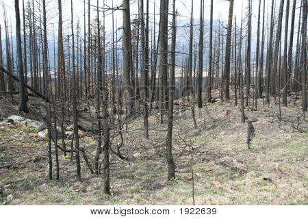 Forest Fire folgen