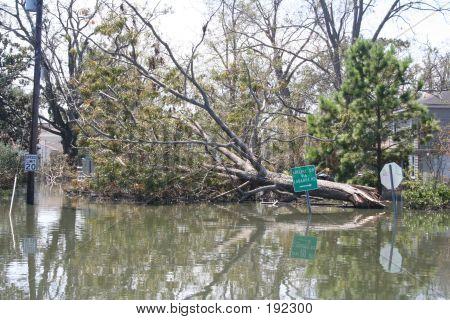 """Abgestürzten Baum In New Orleans von Hurrikan """"Katrina"""""""